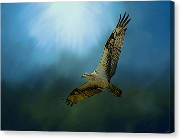 Osprey In The Evening Light Canvas Print by Jai Johnson