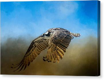 Osprey Over Pickwick Canvas Print by Jai Johnson