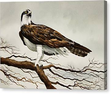 Osprey Sea Hawk Canvas Print by James Williamson