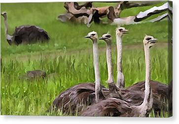 Ostriches In Africa Canvas Print by Dan Sproul