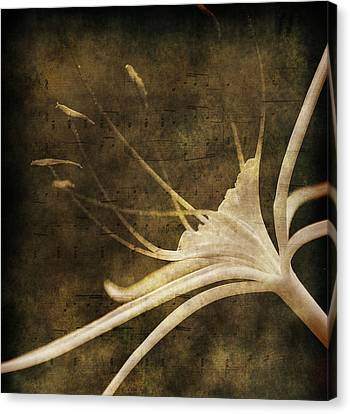Our Melody Canvas Print by Susanne Van Hulst