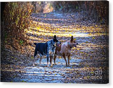 Out For A Walk Canvas Print by Elizabeth Winter