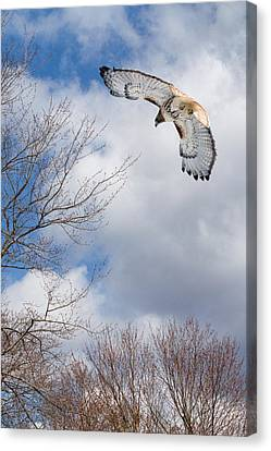 Out Of The Blue Canvas Print by Bill Wakeley