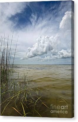 Outer Banks Coastline Canvas Print by Matt Tilghman