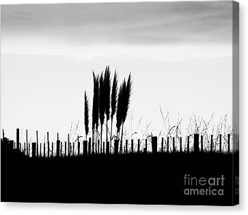 Over The Fence Canvas Print by Karen Lewis