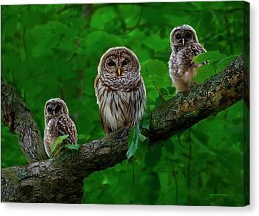 Owl Family Canvas Print by Ron Jones