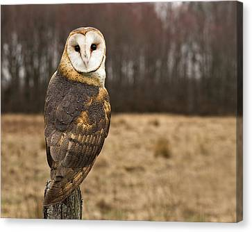 Owl Looking At Camera Canvas Print by Jody Trappe Photography