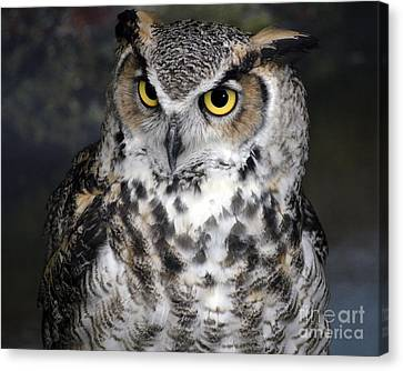 Owl Canvas Print by Steven Brennan