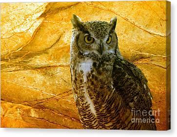 Owl Canvas Print by Teresa Zieba