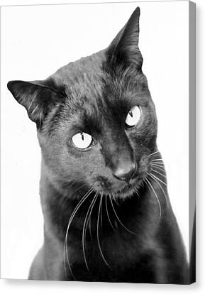 Pablo  Canvas Print by Heather S Huston