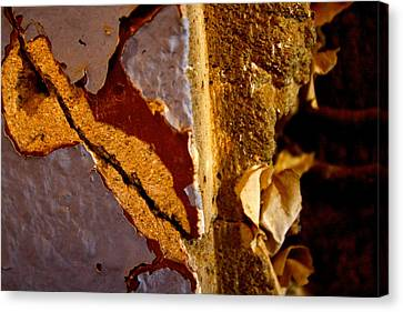 Painted Layers Canvas Print by Caroline Walker