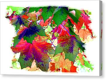 Painted Maple Leaves  Canvas Print by Will Borden