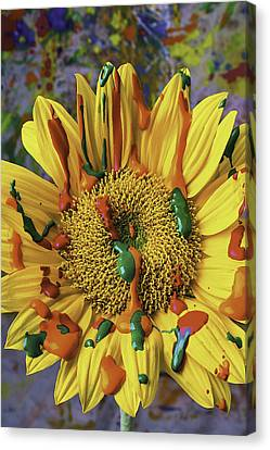 Painted Sunflower Canvas Print by Garry Gay