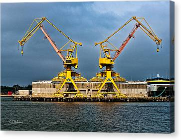 Pair Of Cranes Canvas Print by Christopher Holmes