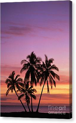 Palm Cluster Canvas Print by Allan Seiden - Printscapes