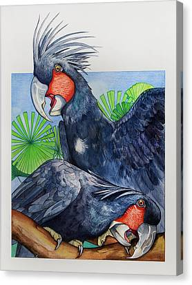 Palm Cockatoos Canvas Print by Robert Lacy