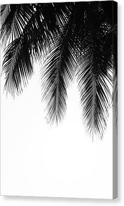 Palm Leaves Canvas Print by Fine Arts