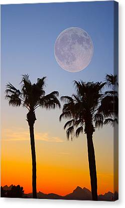 Palm Tree Full Moon Sunset Canvas Print by James BO  Insogna