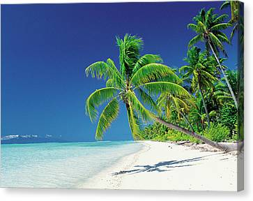 Palm Trees Bending Over The Beach Canvas Print by Panoramic Images