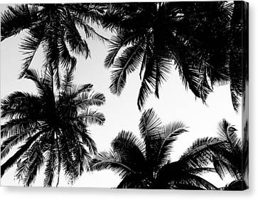 Palm Trees Canvas Print by Fine Arts