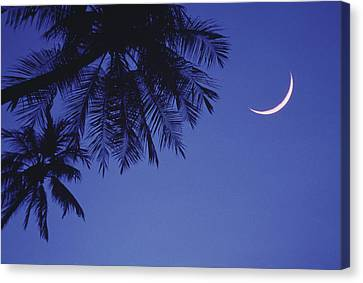 Palms And Crescent Moon Canvas Print by Anne Rippy