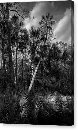Palms And Palmettos Canvas Print by Marvin Spates