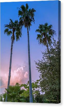 Palms And Storms Canvas Print by Marvin Spates