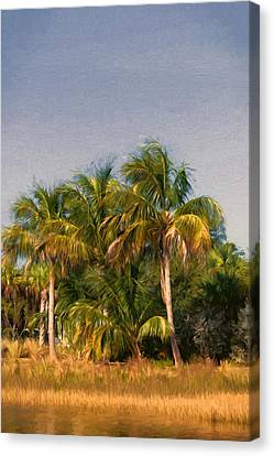 Palms - Naples Florida Canvas Print by Kim Hojnacki