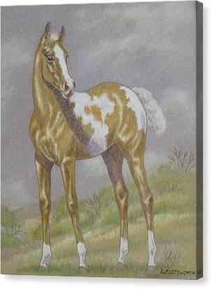 Palomino Paint Foal Canvas Print by Dorothy Coatsworth