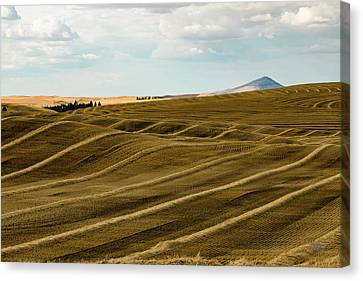 Palouse 23 Canvas Print by Claude Dalley
