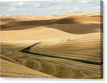Palouse 25 Canvas Print by Claude Dalley