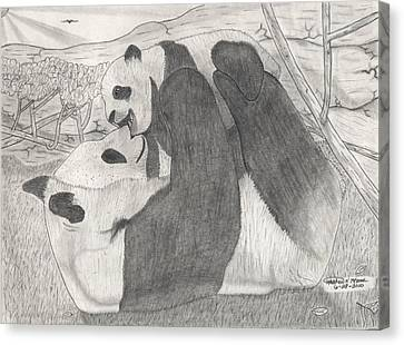 Panda Family Canvas Print by Matthew Moore