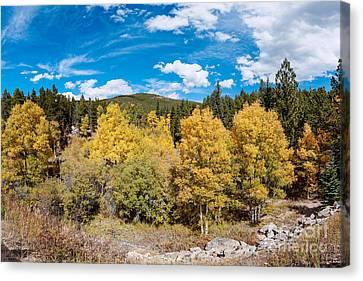 Panorama Of Fall Foliage Aspens In Colorado - Arapaho National Forest - Peak To Peak Highway Canvas Print by Silvio Ligutti