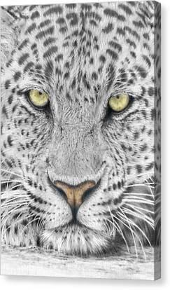 Panthera Pardus - Leopard Close-up Canvas Print by Steven Paul Carlson