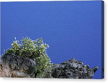 Paradise For Backpackers - Crater Lake In Crater National Park - Oregon Canvas Print by Christine Till