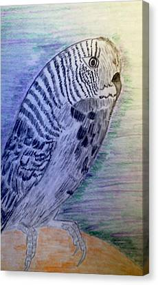 Parakeet Canvas Print by Nicole Burrell