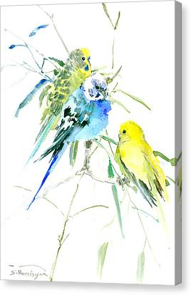 Parakeets Canvas Print by Suren Nersisyan