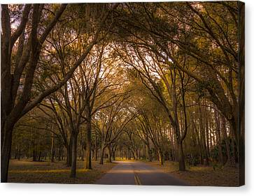 Park Overhang Canvas Print by Marvin Spates