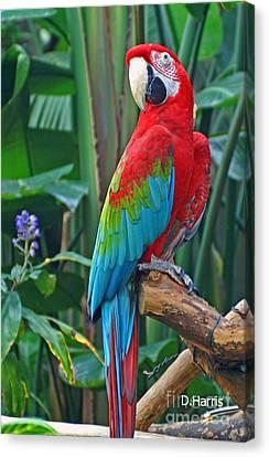 Parrot Canvas Print by Dawn Harris