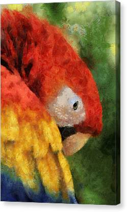 Parrot Canvas Print by Elaine Frink