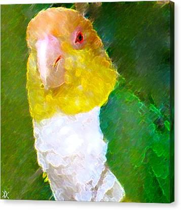 Parrot Grace Canvas Print by Debra     Vatalaro