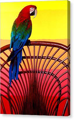 Parrot Sitting On Chair Canvas Print by Garry Gay