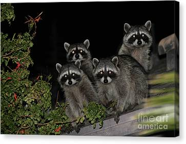 Party Of Five On The Roof Top Canvas Print by Nina Prommer