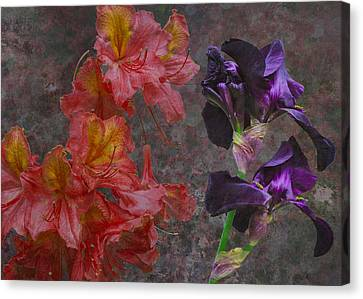 Paso Doble Canvas Print by Eric Ewing