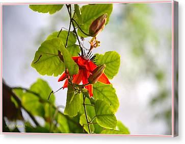 Passiflora Vine Canvas Print by Sonali Gangane