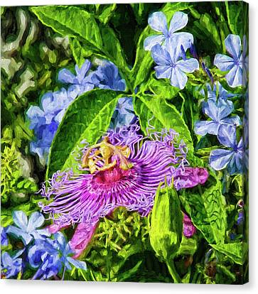 Passion Flower And Plumbago Canvas Print by HH Photography of Florida