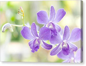 Passion For Flowers. Purple Orchids Canvas Print by Jenny Rainbow