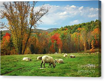 Pasture - New England Fall Landscape Sheep Canvas Print by Jon Holiday