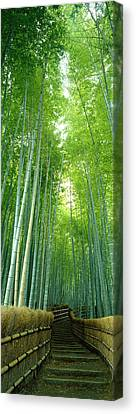 Path Through Bamboo Forest Kyoto Japan Canvas Print by Panoramic Images