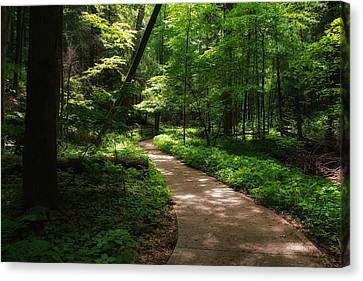 Path To Conkle's Hollow Canvas Print by Rachel Cohen